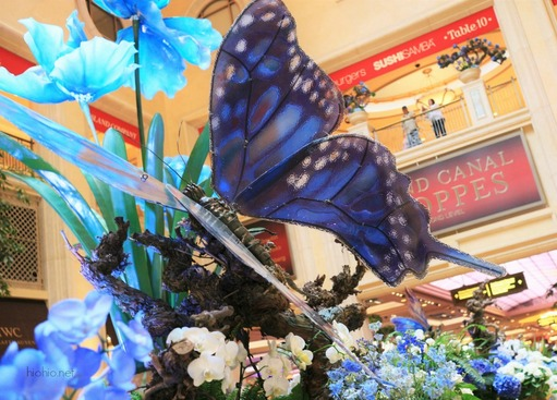 Palazzo Las Vegas (Butterfly display).