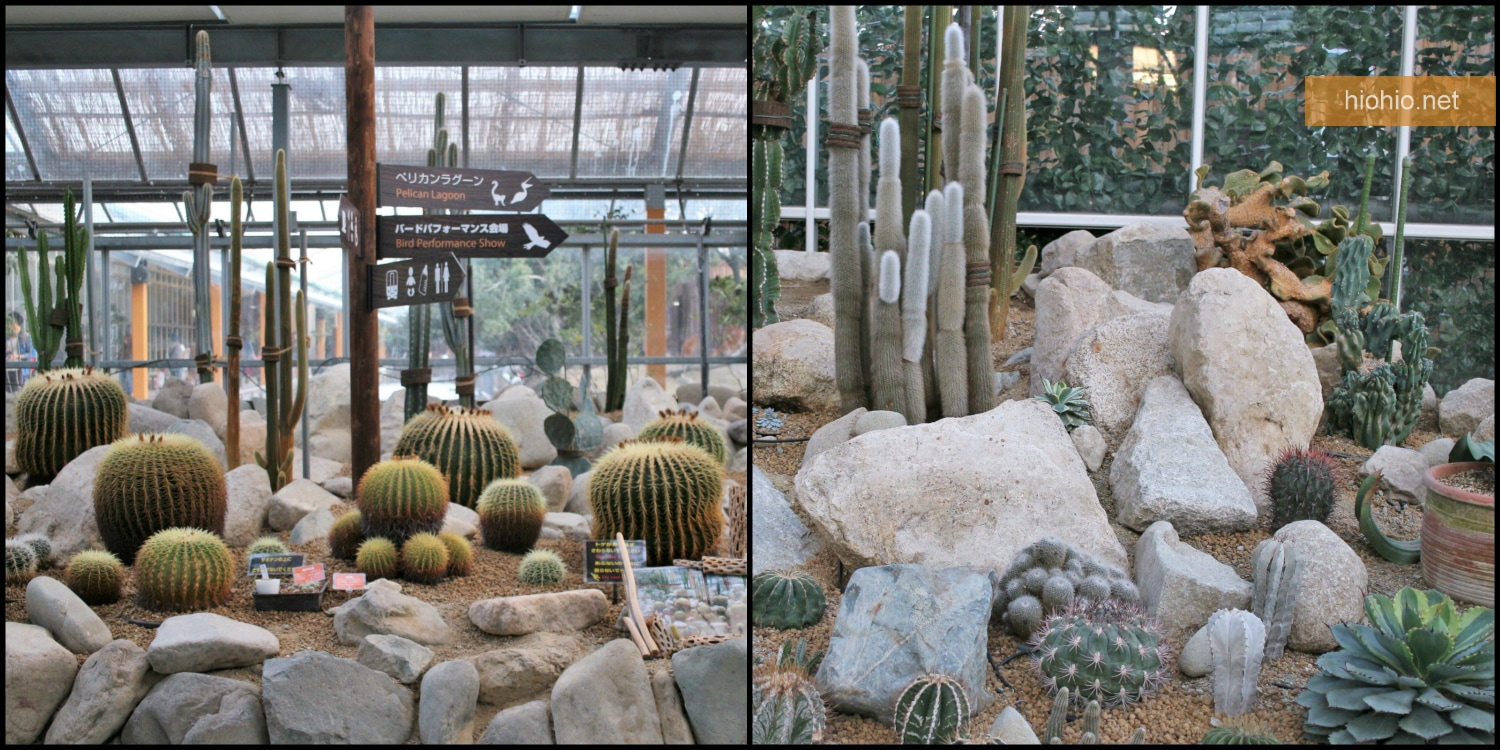 Kobe Animal Kingdom Japan visit (Cactus plants).